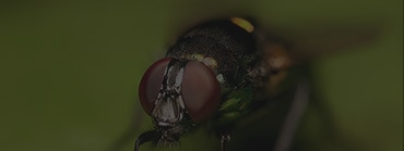 SOS-Parasites - Insectes Volants