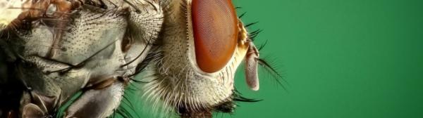 Élimination des insectes