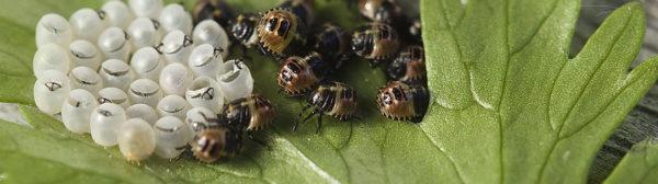Le pest-control par SOS-Parasites, intervention en week-end et prix compétitifs !