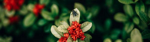 Les insectes saisonniers