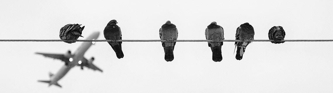 Problèmes de pigeons